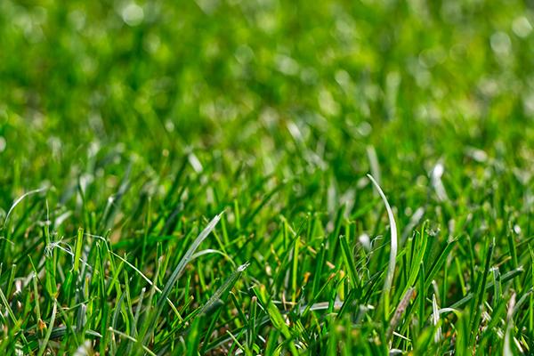 Nytt gress i Mellomenga Borettslag