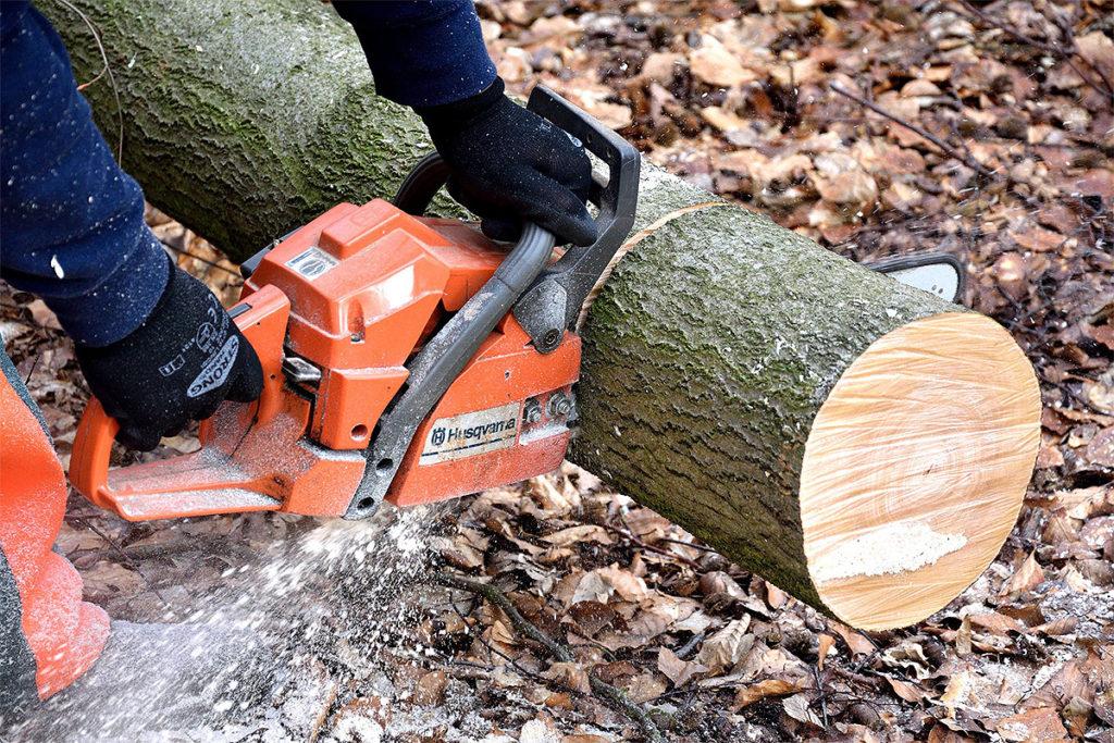 Felling av trær i Mellomenga Borettslag.