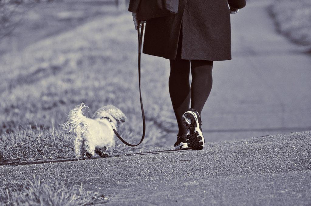 Lufting av hunder i Mellomenga Borettslag